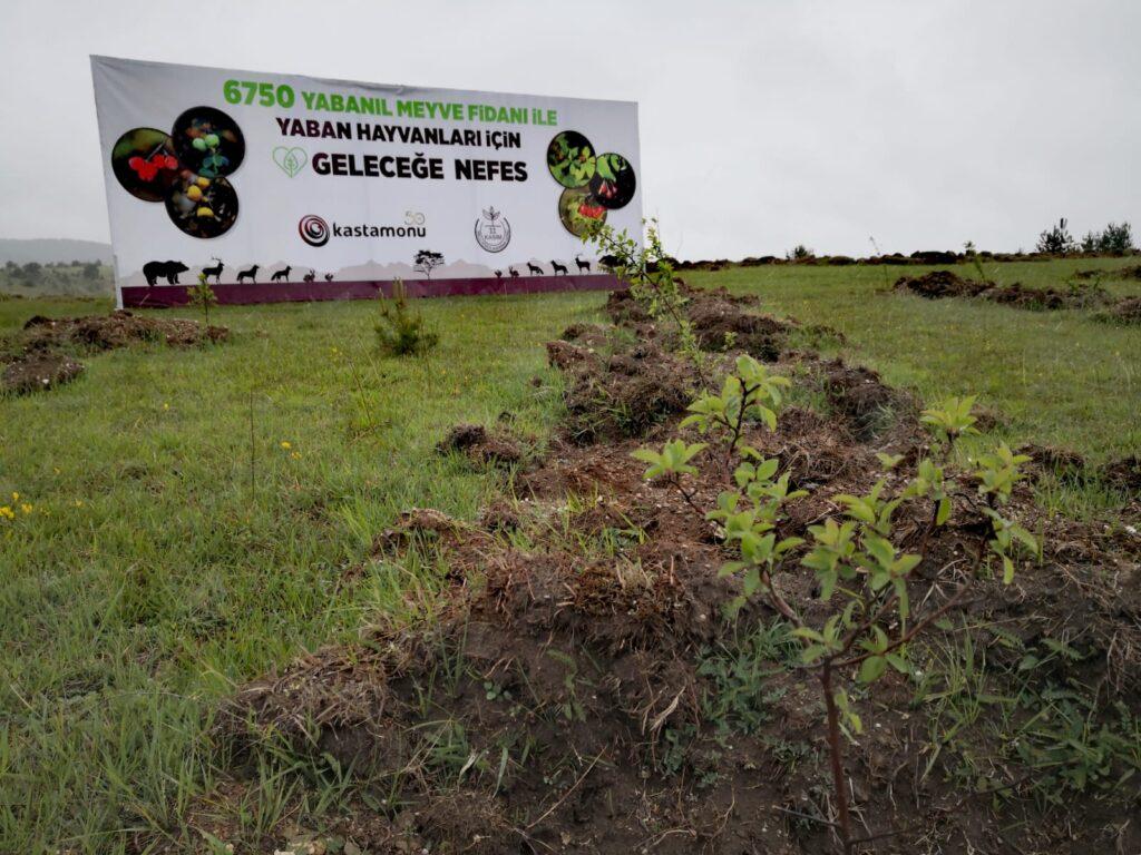 Plantasyon Kastamonu Gelecege Nefes Projesi
